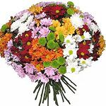 Chrysanthemums - flowers and bouquets on uaflorist.com