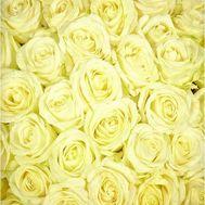 Белые розы поштучно - цветы и букеты на uaflorist.com