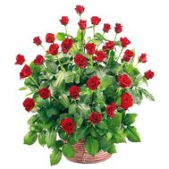 Basket of 45 roses - flowers and bouquets on uaflorist.com