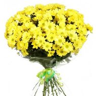 Bouquet of flowers from 13 chrysanthemums - flowers and bouquets on uaflorist.com
