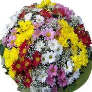 Букет цветов 25 ромашковидных хризантем - цветы и букеты на uaflorist.com