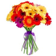 A bouquet of 19 gerberas - flowers and bouquets on uaflorist.com