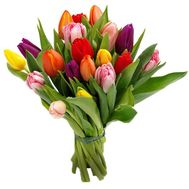 Bouquet of 17 tulips - flowers and bouquets on uaflorist.com
