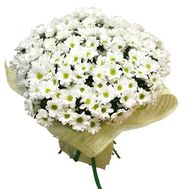 Букет из 35 белых хризантем - цветы и букеты на uaflorist.com