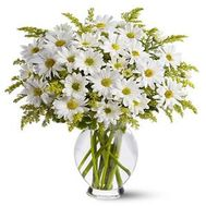 A bouquet of 11 chamomile chrysanthemums - flowers and bouquets on uaflorist.com