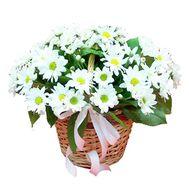 Корзина цветов из 7 хризантем - цветы и букеты на uaflorist.com