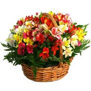 Basket of flowers from 25 alstroemerias - flowers and bouquets on uaflorist.com