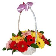 Basket of 17 gerberas flowers - flowers and bouquets on uaflorist.com