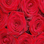 Красные розы поштучно - цветы и букеты на uaflorist.com