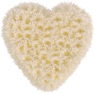 Heart of 25 white chrysanthemums - flowers and bouquets on uaflorist.com