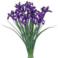 11 irises - flowers and bouquets on uaflorist.com