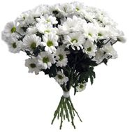 13 chamomile chrysanthemums - flowers and bouquets on uaflorist.com