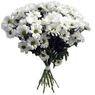 13 ромашковых хризантем - цветы и букеты на uaflorist.com