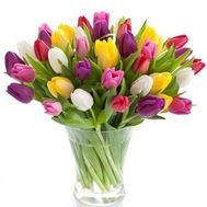 Bouquet of 61 tulips - flowers and bouquets on uaflorist.com