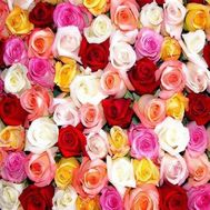 Multicolored roses individually - flowers and bouquets on uaflorist.com