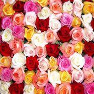 Разноцветные розы поштучно - цветы и букеты на uaflorist.com