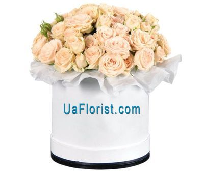 """Creamy bush roses in the box"" in the online flower shop uaflorist.com"