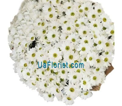 """51 chamomile chrysanthemum"" in the online flower shop uaflorist.com"