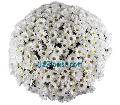"""Buy 101 chamomile"" in the online flower shop uaflorist.com"