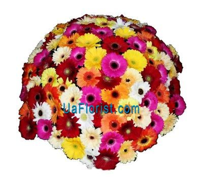 """Bouquet of 101 gerberas"" in the online flower shop uaflorist.com"