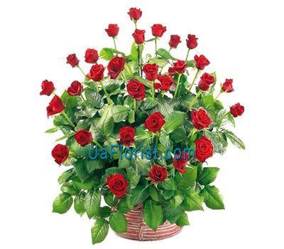 """Basket of 45 roses"" in the online flower shop uaflorist.com"