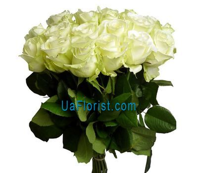 """17 white roses"" in the online flower shop uaflorist.com"