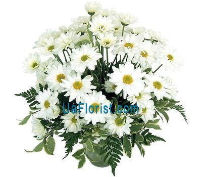 """Bouquet of flowers 9 chamomile chrysanthemums"" in the online flower shop uaflorist.com"