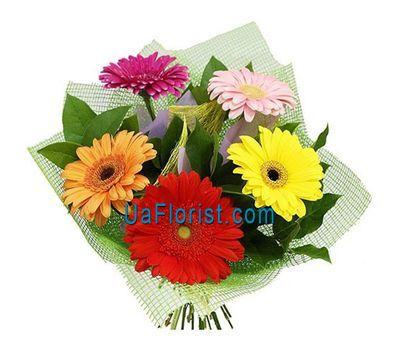 """Bouquet of 5 gerberas"" in the online flower shop uaflorist.com"