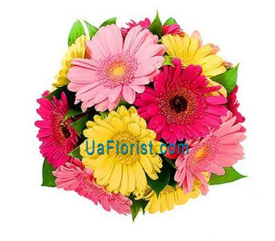 """A bouquet of 13 gerberas flowers"" in the online flower shop uaflorist.com"