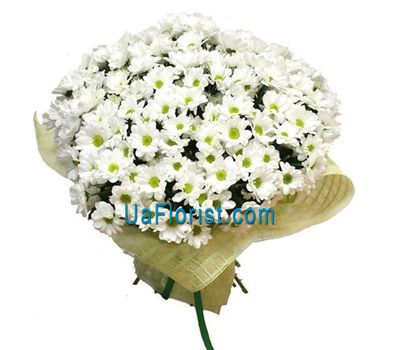 """Bouquet of 35 white chrysanthemums"" in the online flower shop uaflorist.com"
