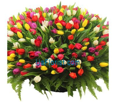"""In the bouquet 501 tulip"" in the online flower shop uaflorist.com"