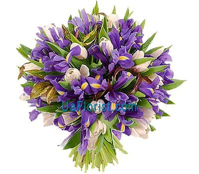 """A bunch of 35 irises and 22 tulips"" in the online flower shop uaflorist.com"