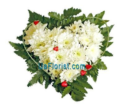 """A composition of 7 white chrysanthemums"" in the online flower shop uaflorist.com"