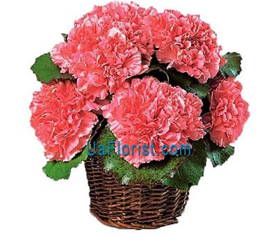 """Basket of flowers from 11 carnations"" in the online flower shop uaflorist.com"