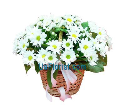 """Basket of flowers from 7 chrysanthemums"" in the online flower shop uaflorist.com"