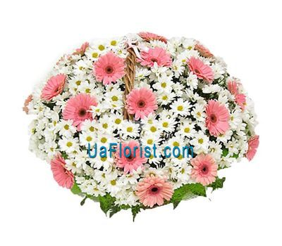 """Basket of flowers from 19 chrysanthemums and 25 gerberas"" in the online flower shop uaflorist.com"