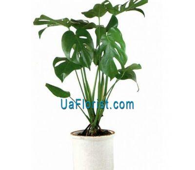 """""""Monster"""" in the online flower shop uaflorist.com"""
