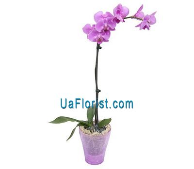 """Orchid pink"" in the online flower shop uaflorist.com"