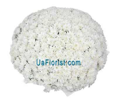 """""""A bunch of 101 white chrysanthemums"""" in the online flower shop uaflorist.com"""