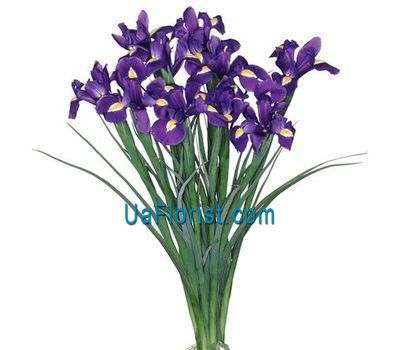 """11 irises"" in the online flower shop uaflorist.com"