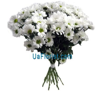 """13 chamomile chrysanthemums"" in the online flower shop uaflorist.com"