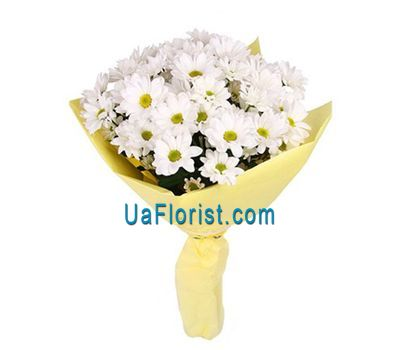 """7 camomile chrysanthemums"" in the online flower shop uaflorist.com"